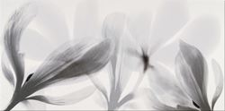 Opoczno Colorado Nights Inserto Flower OD673-016