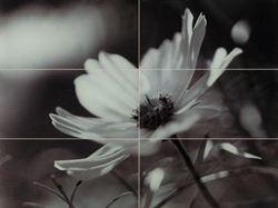 Domino Joy flower