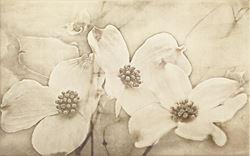 Cersanit Tuti beige inserto flower WD452-003