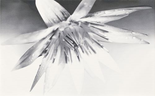 Cersanit Negra white inserto flower WD400-004
