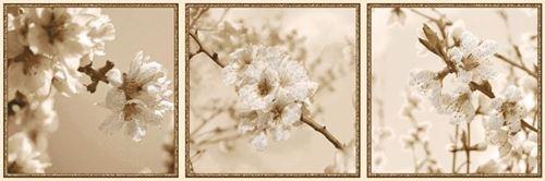 Azario Next Bloom B