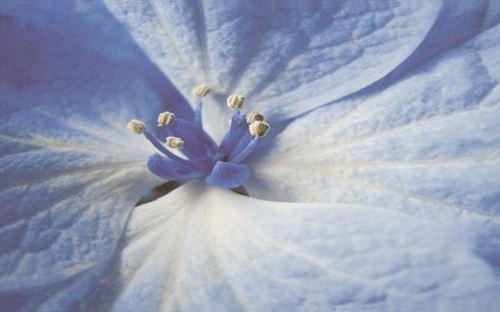 Paradyż Acapulco Blue inserto Kwiat