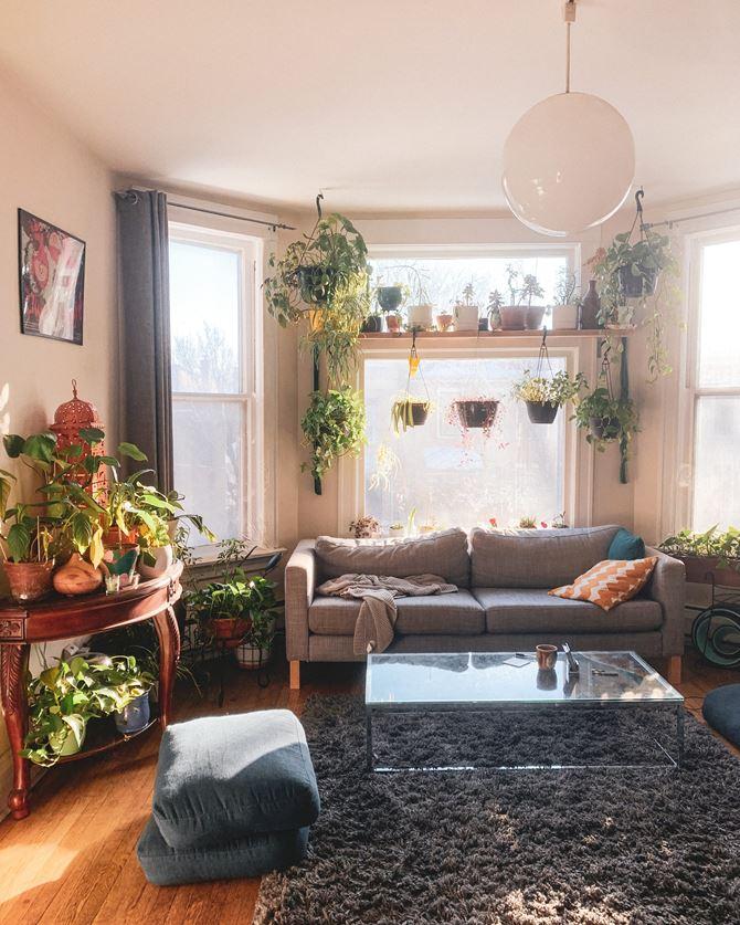 salon z roślinami boho