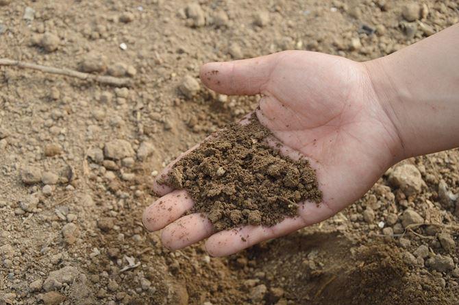 Ręka w ziemi
