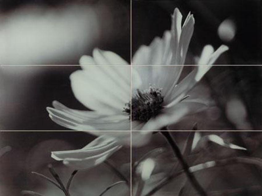 Obraz ścienny Domino Joy flower