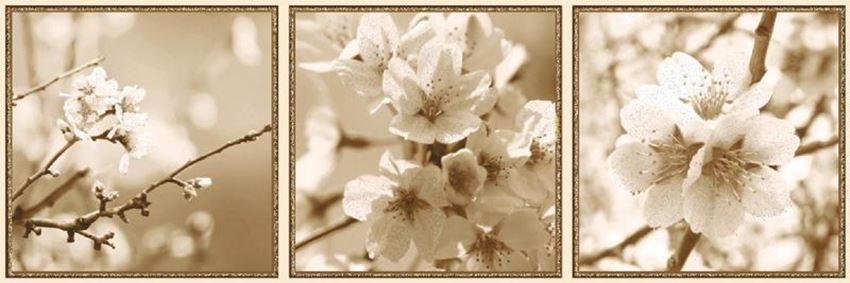 Azario Next Bloom A