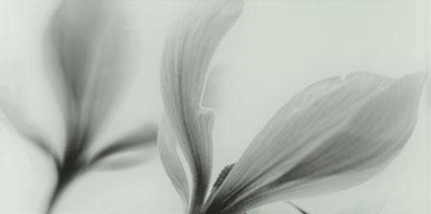 Dekor ścienny Domino Joy flower